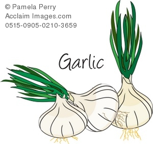 Clip Art Illustration of Heads of Garlic.