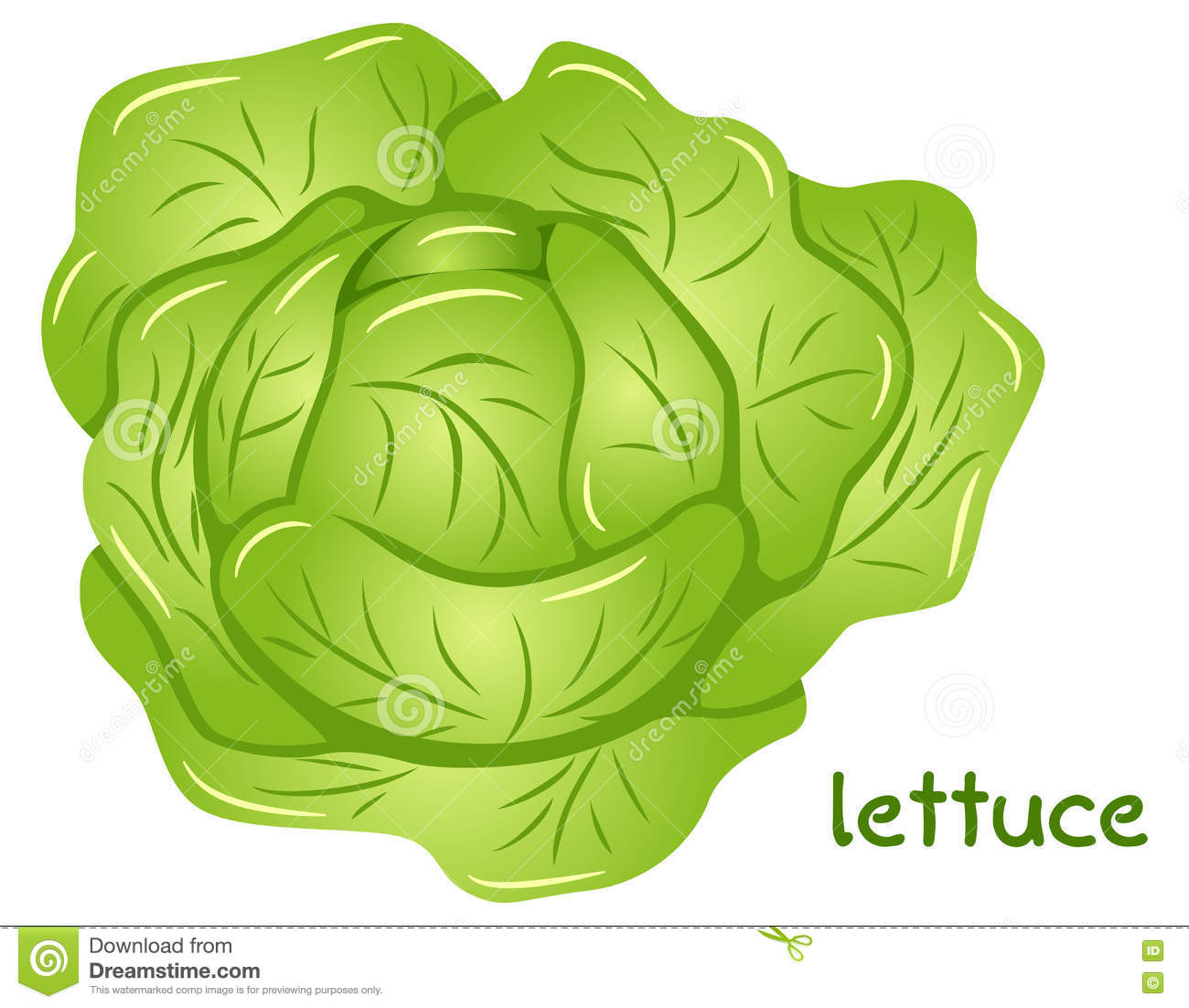 Head of lettuce clipart - Clipground