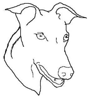 Greyhound Head Study Outline Clip Art Download.