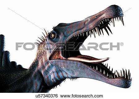 Stock Illustration of Spinosaurus Head Study u57340376.