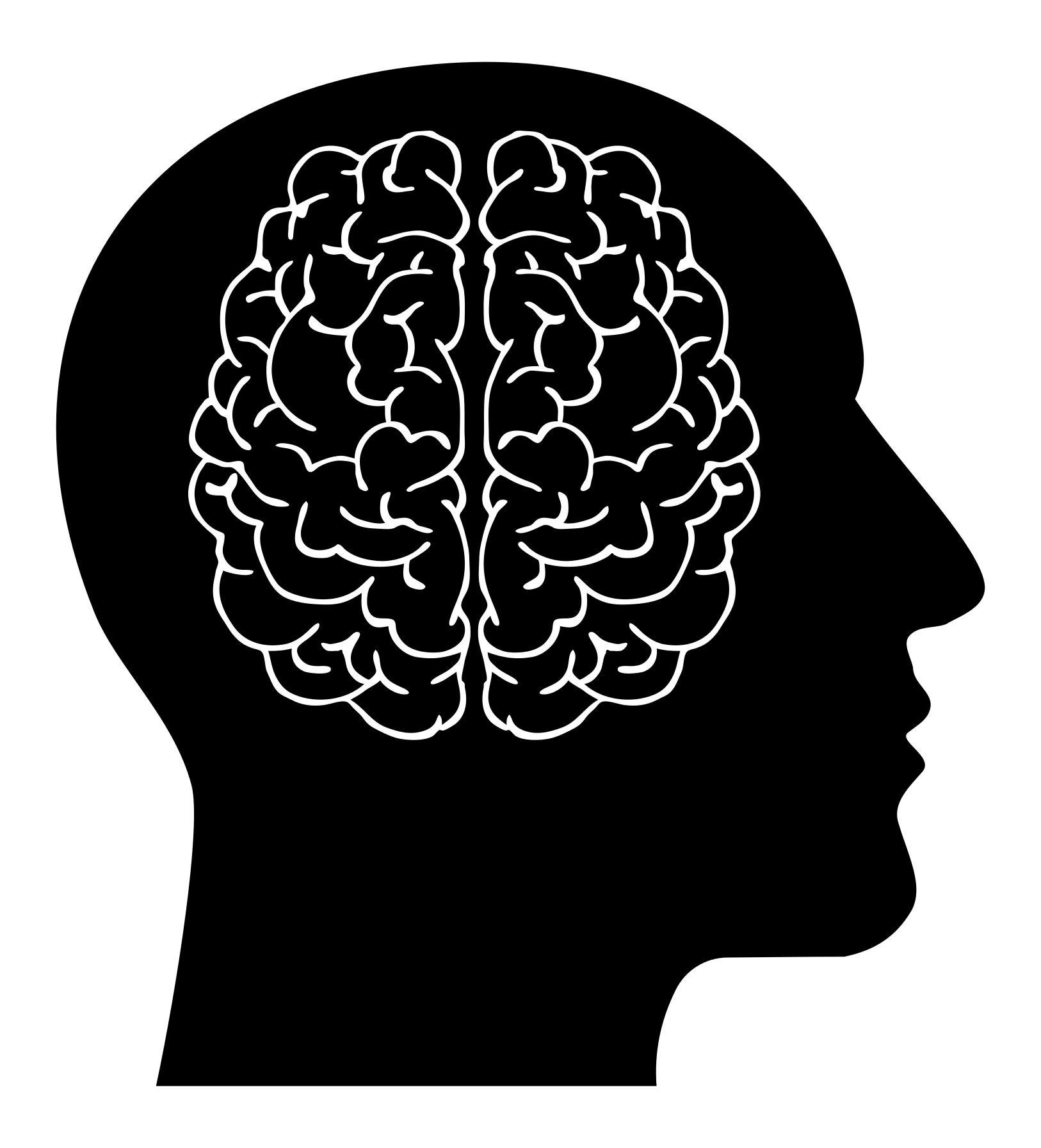 Brain In Man Head.