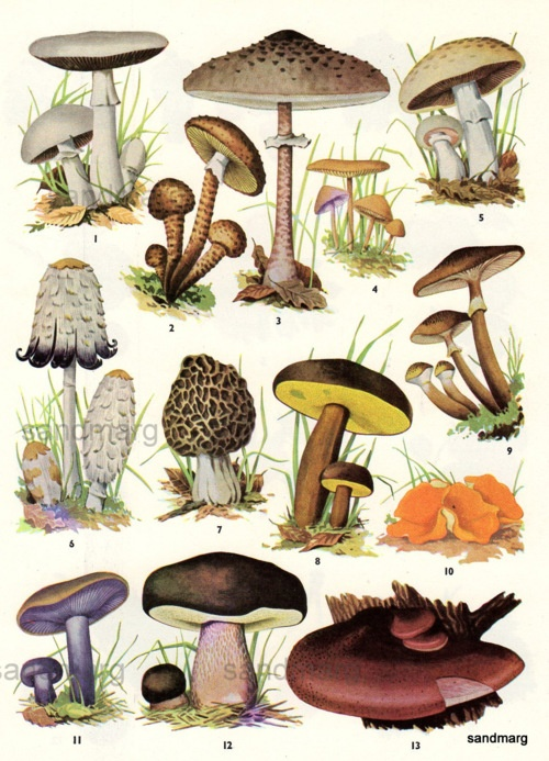 1000+ images about mushrooms magic healing effects on Pinterest.