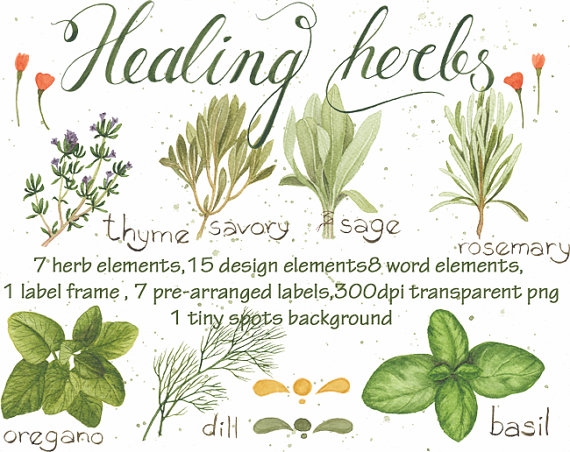 Watercolor clipart Healing Herbs Digital by WatercolorNomads.
