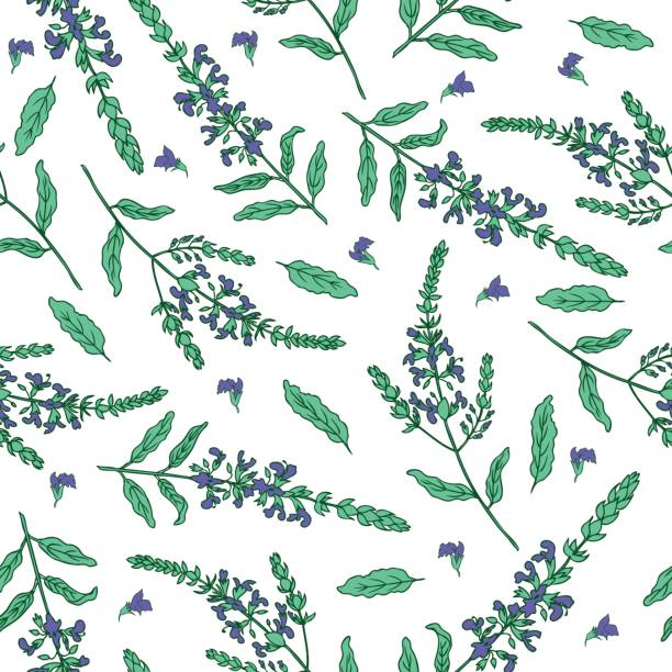 Purple Sage Clip Art, Vector Images & Illustrations.