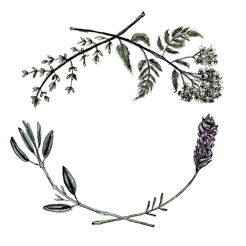 Healing herbs wreath by Sarah Mould Maybe switch out the sage.