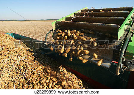 Stock Photograph of vegetables, potatoes, pile, heap, piled.