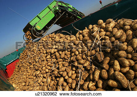Stock Photo of vegetables, potatoes, pile, heap, piled, heaped.