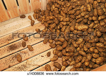 Stock Images of vegetables, potatoes, pile, heap, piled, heaped.