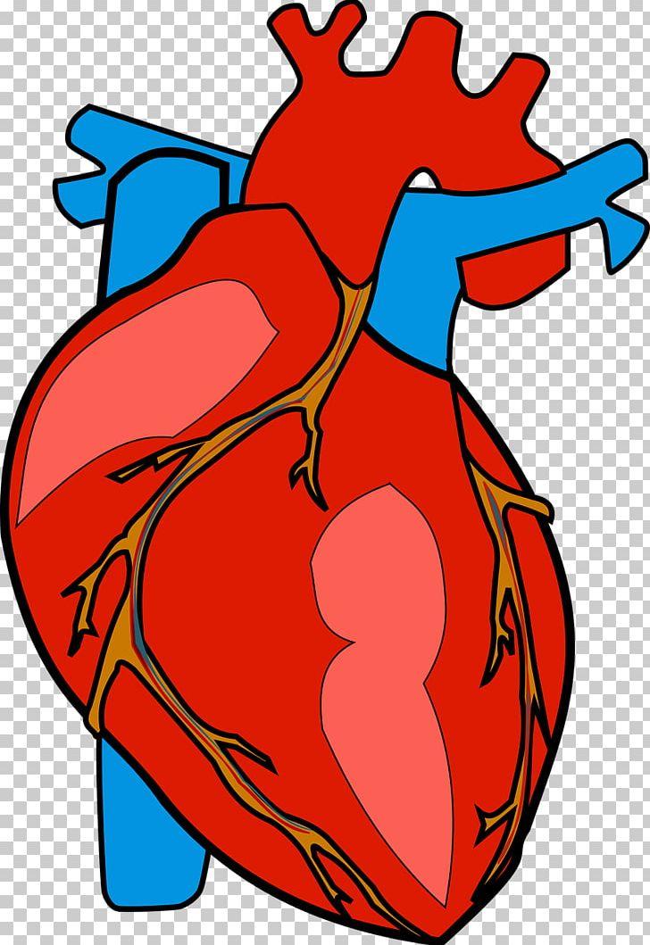 Heart Anatomy PNG, Clipart, Anatomy, Area, Art, Artwork.