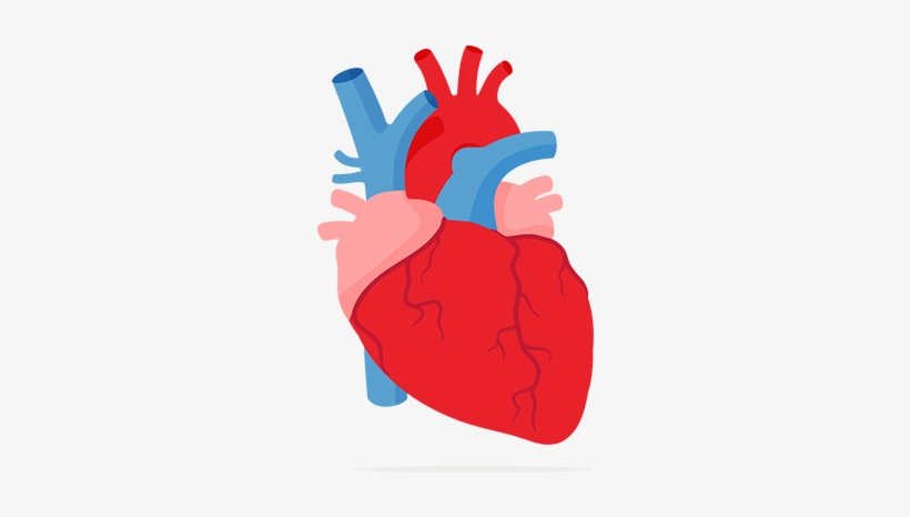 Image Heart And Lungs Clipart.