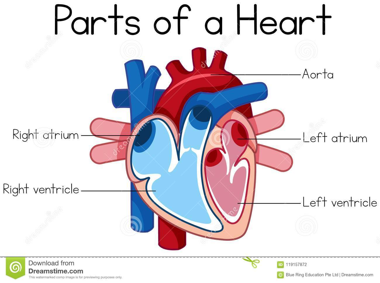 heart diagram clipart 10 free Cliparts | Download images ...