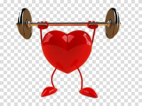 Physical exercise Heart Aerobic exercise Health Physical.