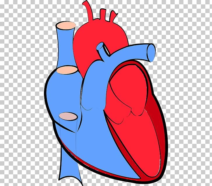 Heart failure Hemodynamics Cardiology Artery, Heart Failure.