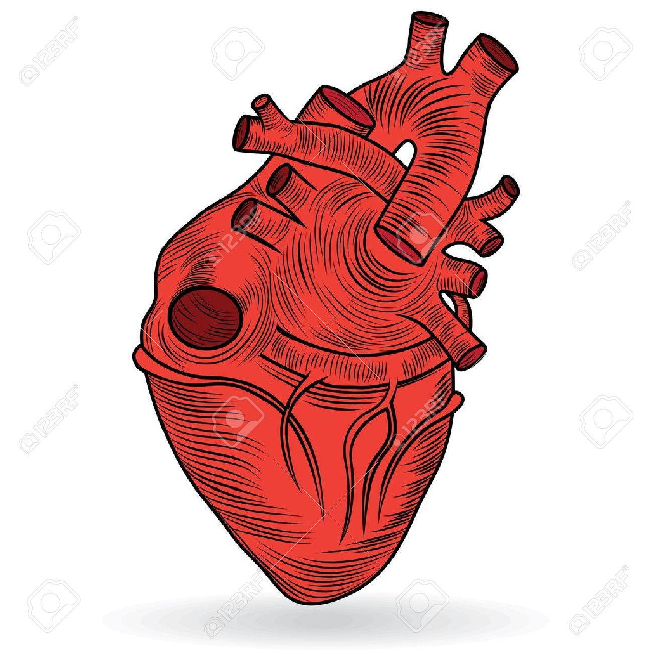 heart in body clipart - Clipground