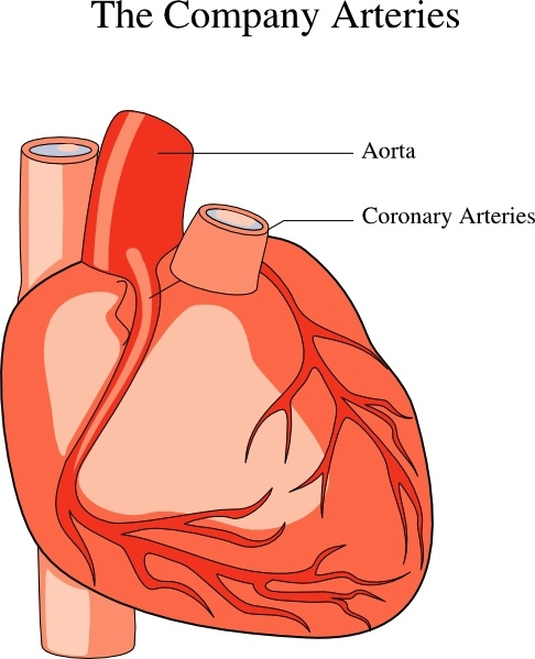 Human Body With Heart Clipart.