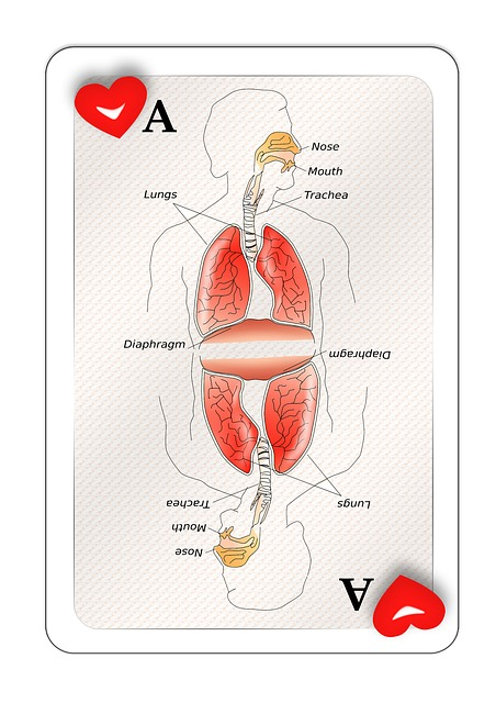Free illustration: Playing Card, Map, Ace, Heart, Body.