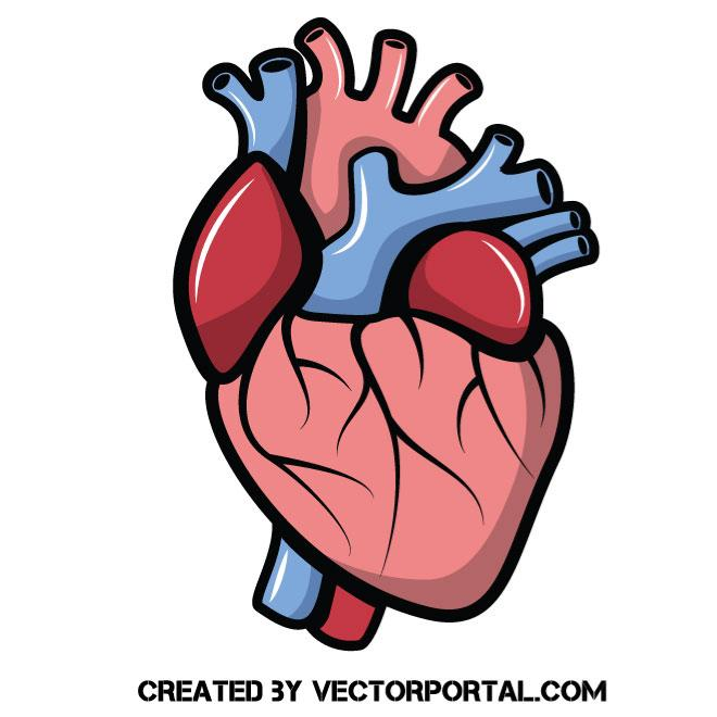 Heart vector clip art.