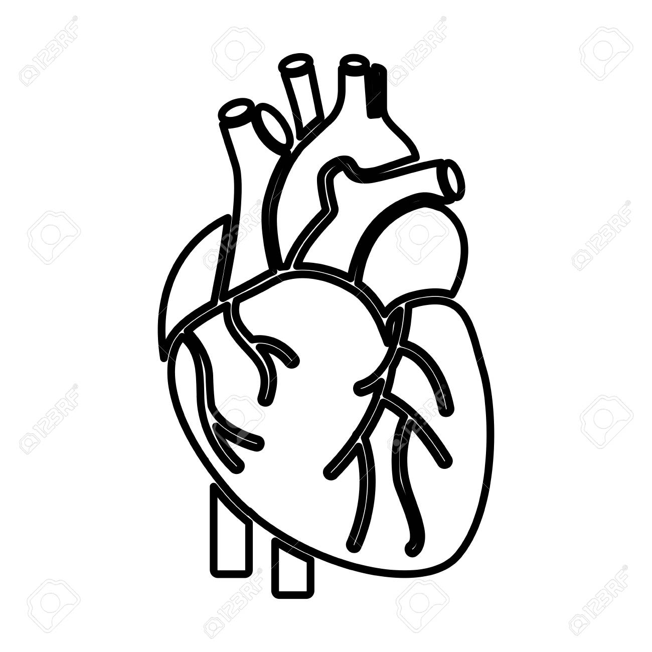 heart organ human icon vector illustration design.