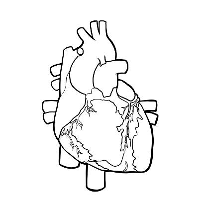 Free Heart Organ Cliparts, Download Free Clip Art, Free Clip Art on.