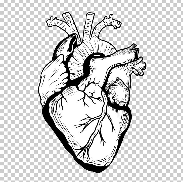 Heart Drawing Organ Designer PNG, Clipart, Arm, Art, Black, Black.