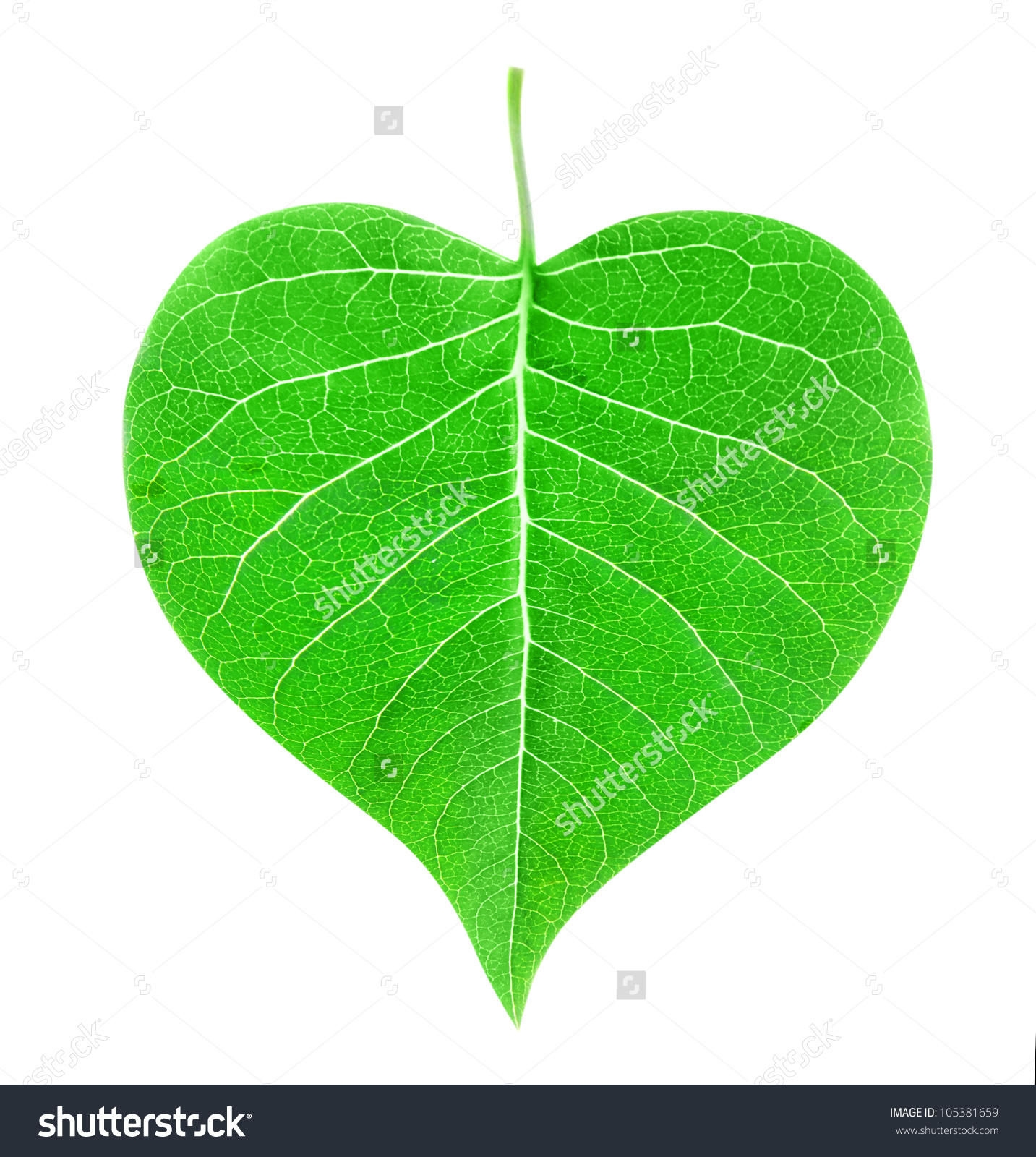 Simple heart leaf tree clipart.