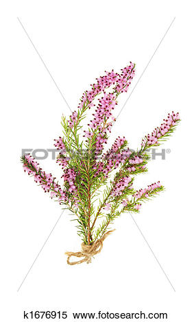 Stock Image of Heather k1676915.