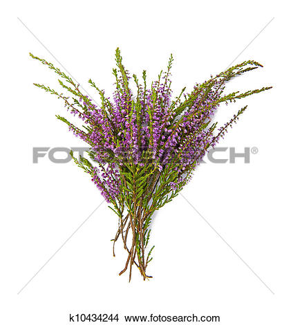 Stock Photo of Bouquet of heather k10434244.