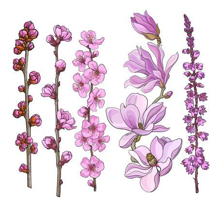 325 Heather Flowers Stock Vector Illustration And Royalty Free.