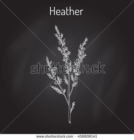 Heathland Stock Vectors & Vector Clip Art.