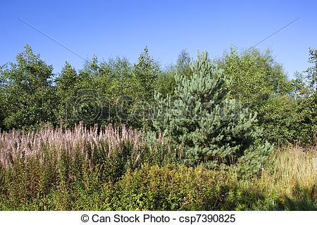Stock Images of heathland trees.