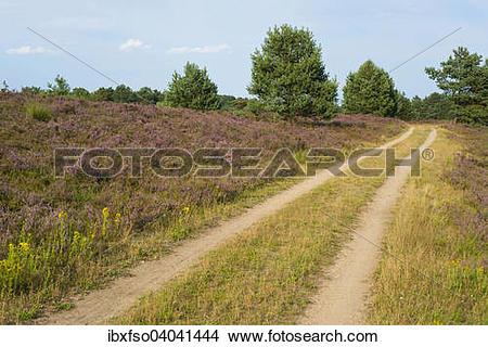 "Stock Photo of ""Path through the heathland, Luneburg Heath Nature."