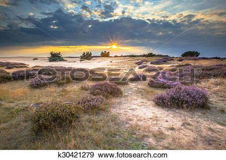Stock Photograph of Hoge Veluwe Sand Heathland k30421279.