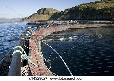 Picture of Salmon fish farm. Hebrides, Scotland. u14329027.