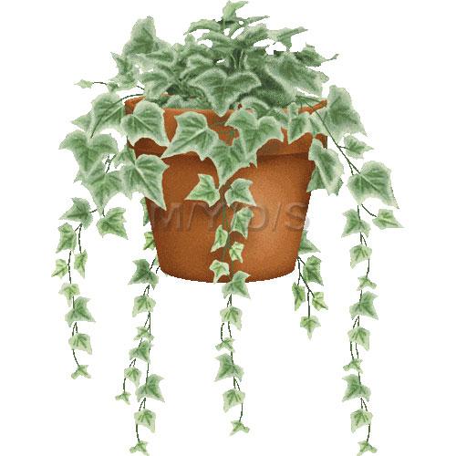 Ivy (Hedera) clipart / Free clip art.