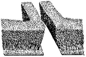 Hedge Clip Art Download.