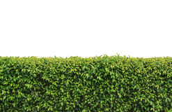 Hedge Clipart Clipground