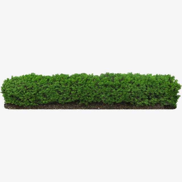 Hedge Plants, Plants Clipart, Ornamental PNG Transparent Clipart.