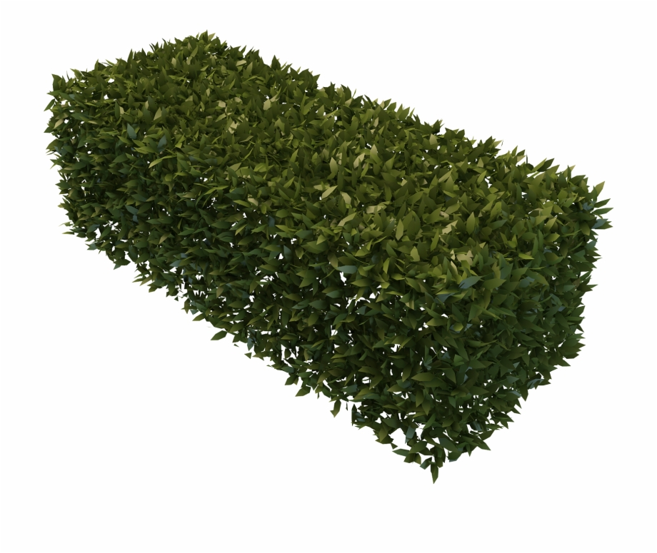 Graphic Free Stock Hedge Bush Png For Free Download.