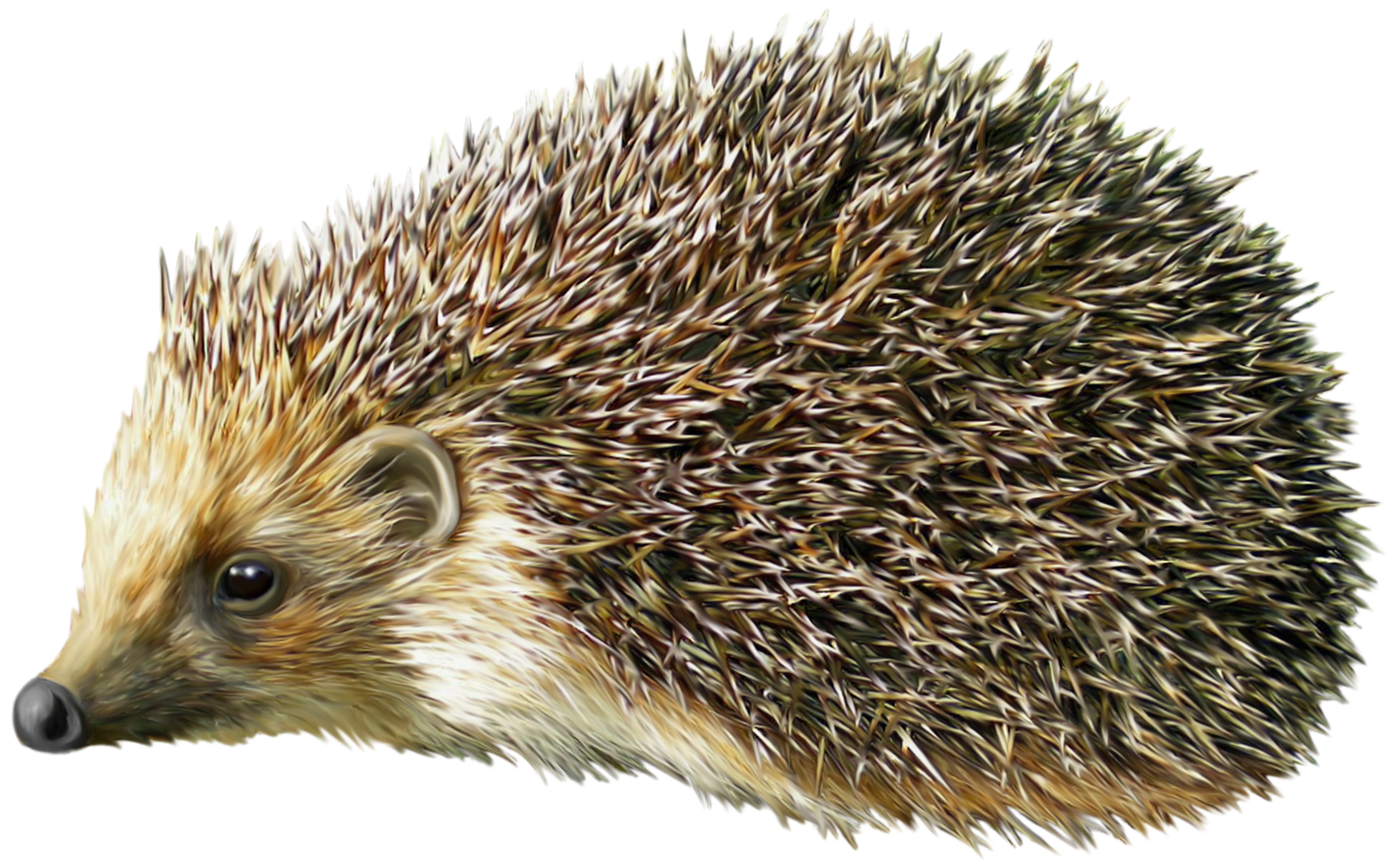 Hedgehog Clipart & Hedgehog Clip Art Images.