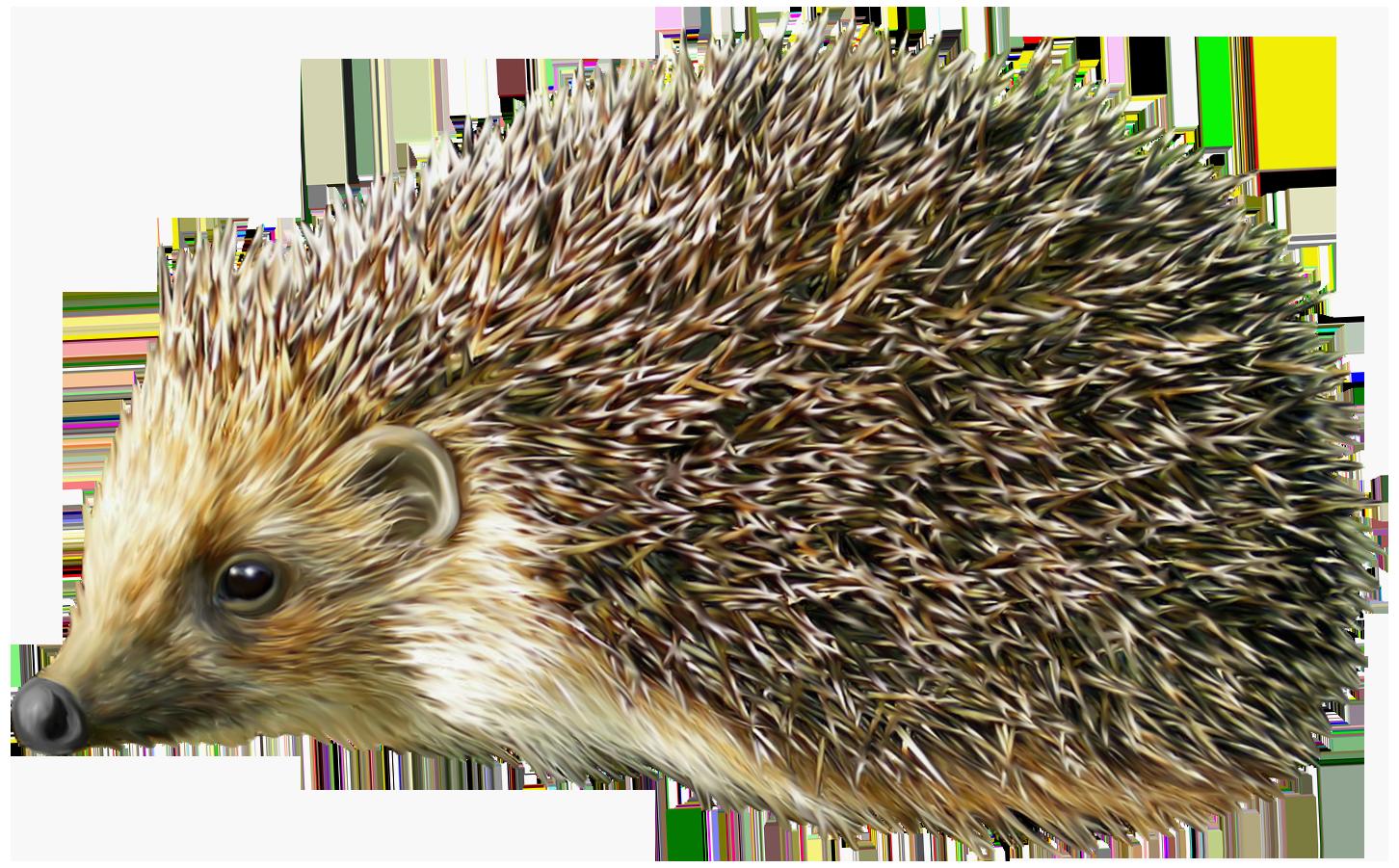 Hedgehog PNG Clipart.