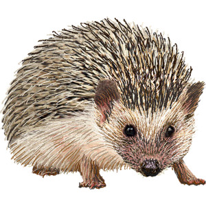 Hedgehogs Clipart.