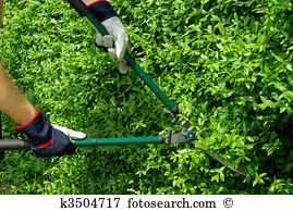 Hedge shears Images and Stock Photos. 1,180 hedge shears.