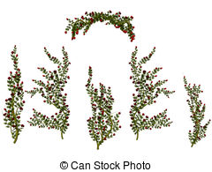 Rose hedges Stock Illustration Images. 40 Rose hedges.