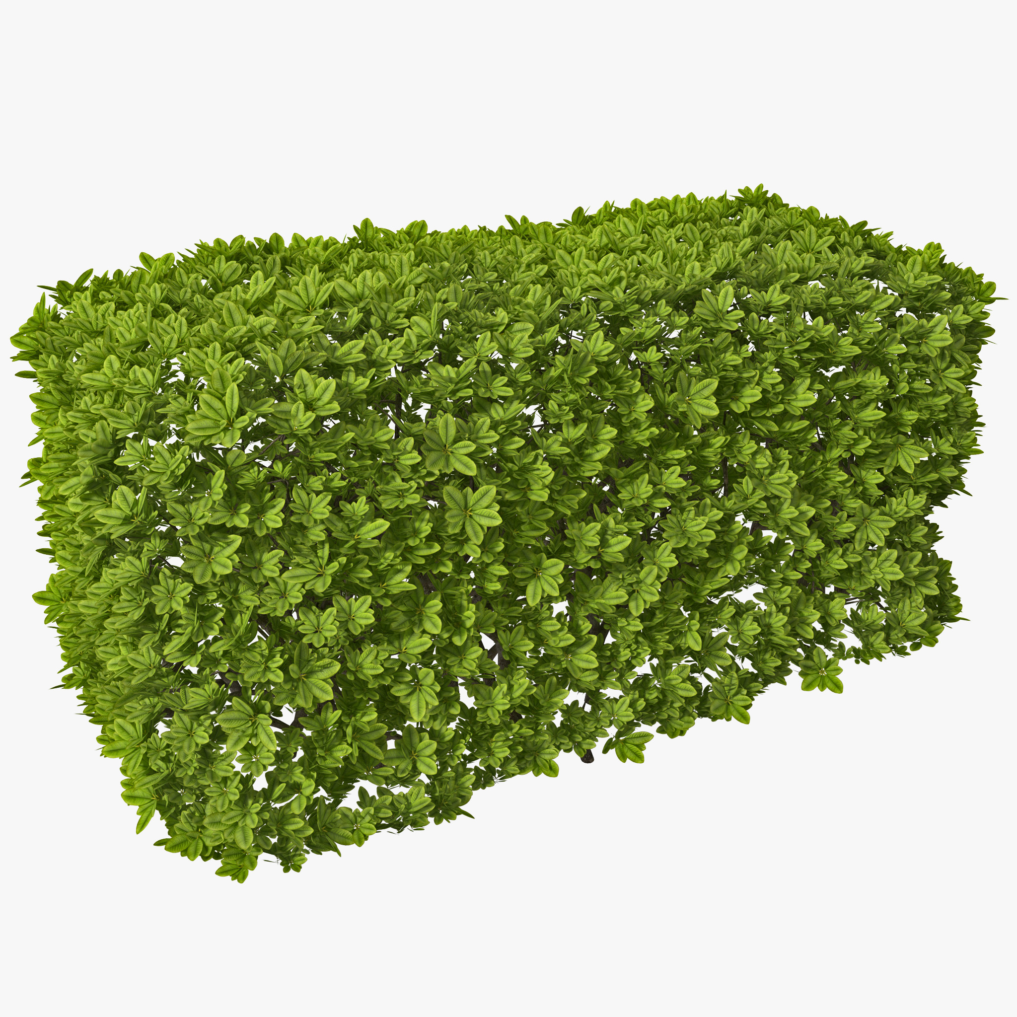 Hedge Bushes: Hedging Clipart