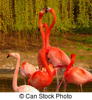 Stock Photographs of Rose Flamingos at Zoo in Heidelberg, Germany.
