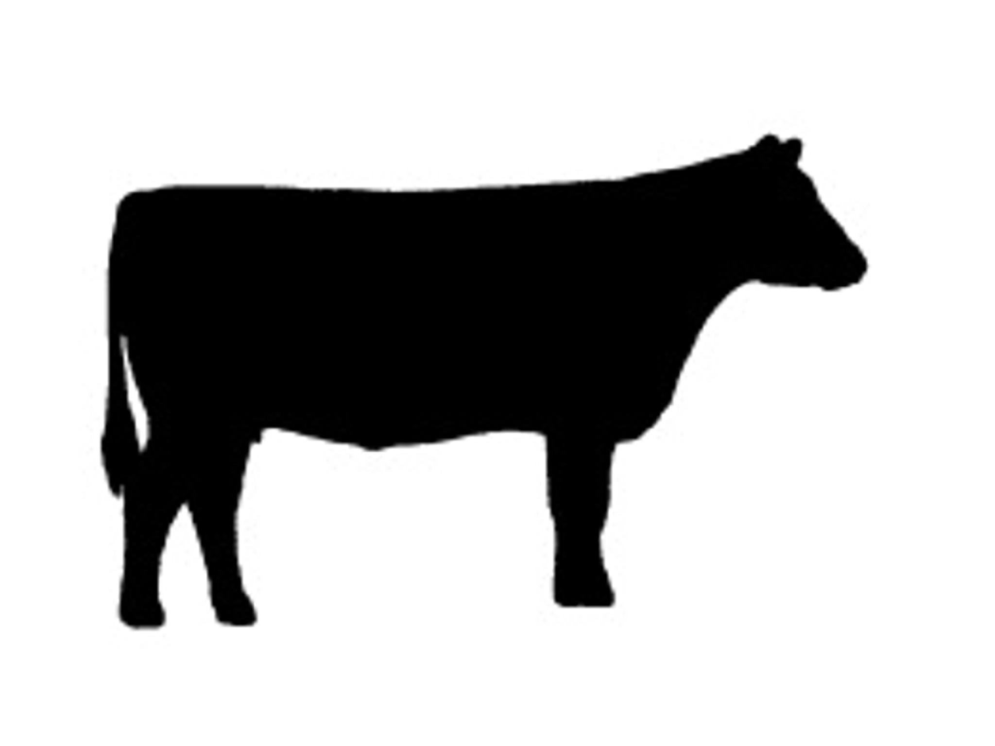Heifer Cow Clipart.