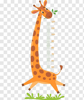 Height Measurement cutout PNG & clipart images.