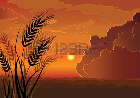 572 Wheat Field Sunset Stock Vector Illustration And Royalty Free.