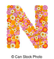 Helichrysum Illustrations and Stock Art. 47 Helichrysum.