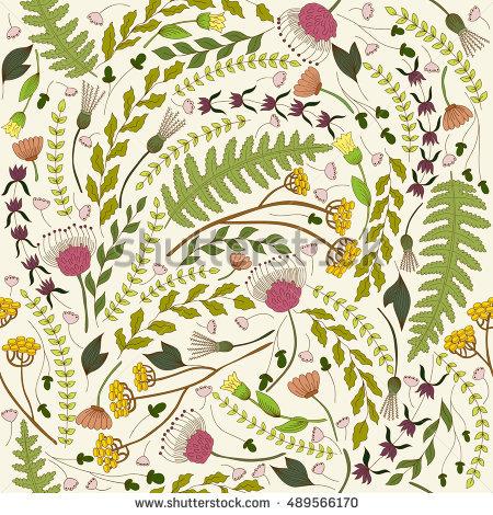 Helichrysum Stock Photos, Royalty.